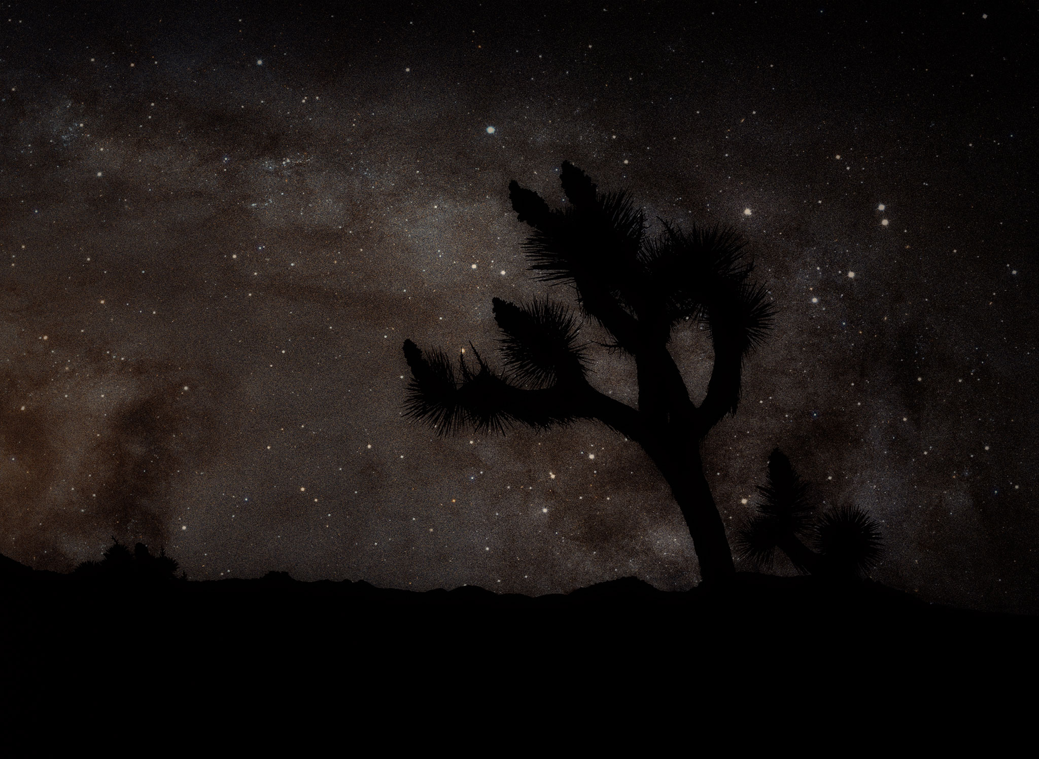 Stars Over Joshua Tree